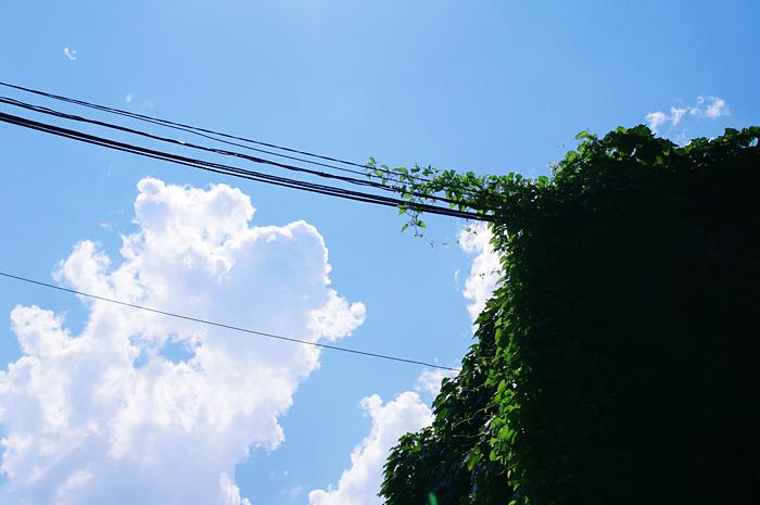 20110717_02.jpg