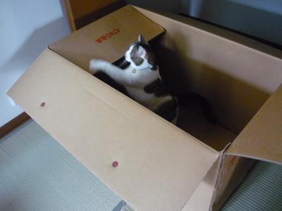 おっきい箱にゃ!