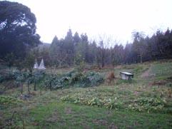リモ農園1