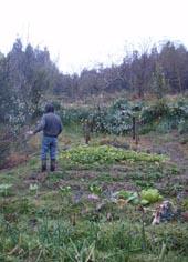 リモ農園2