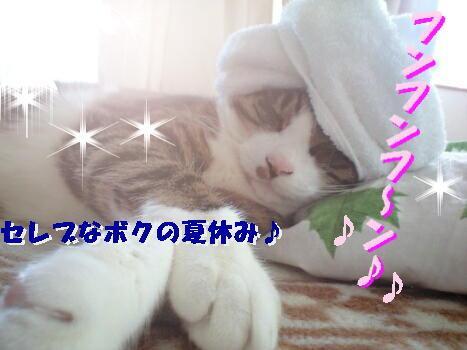 PAP_0252d.jpg