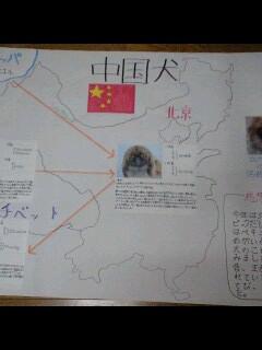 080821夏休み…中国犬-0001