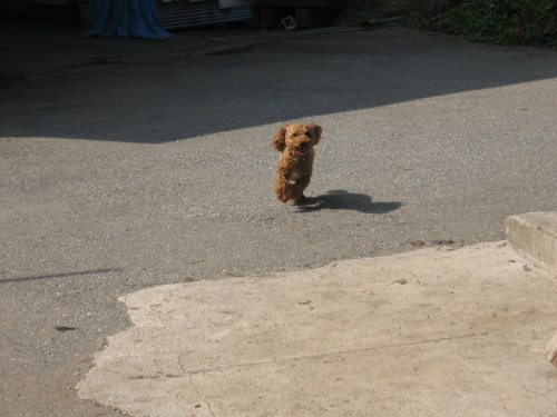 走る走る1