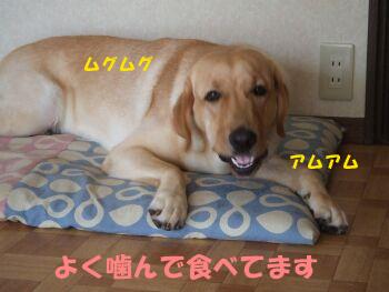 DSCF9081-a.jpg