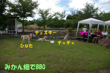 IMGP1347-a.jpg