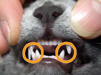 hinata 's tooth