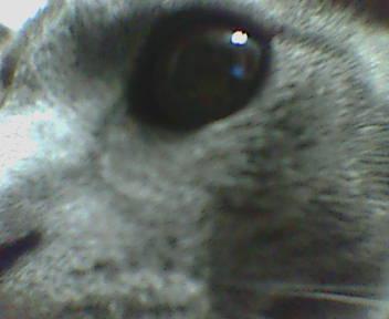 hina's eye