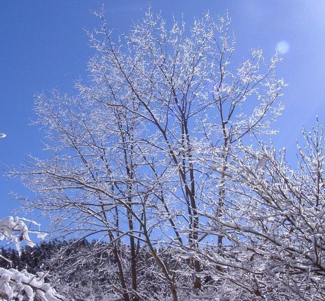 冬 (640x593)