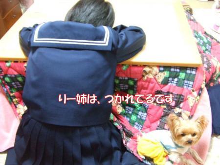 2008_1218pasa2-230001.jpg