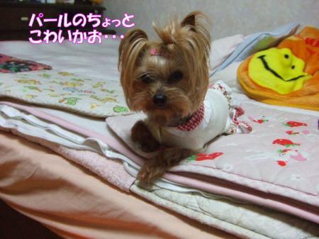 2009_0324pasa2-360001.jpg