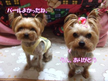 2009_0413pasa2-360011.jpg