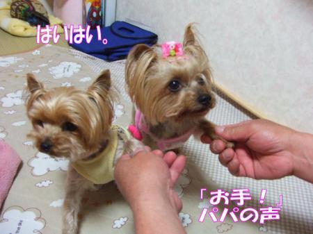 2009_0417pasa2-360004.jpg