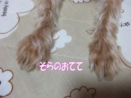 2009_0417pasa2-360006.jpg