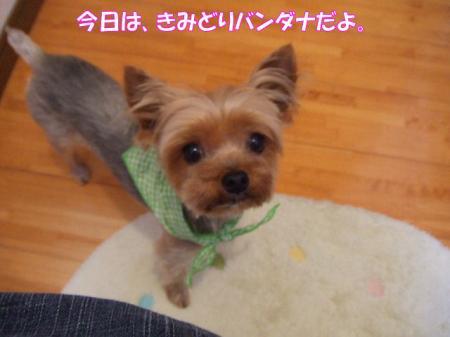 2009_0524pasa2-360002.jpg