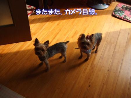 2009_0528pasa2-360001.jpg