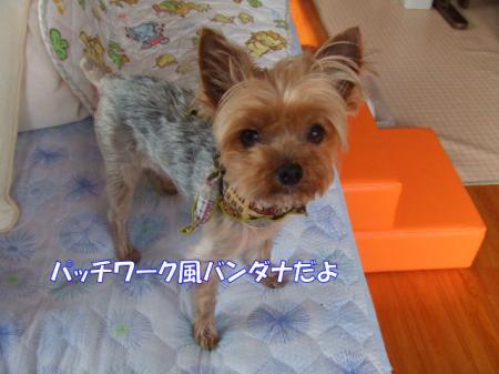 2009_0528pasa2-360002.jpg