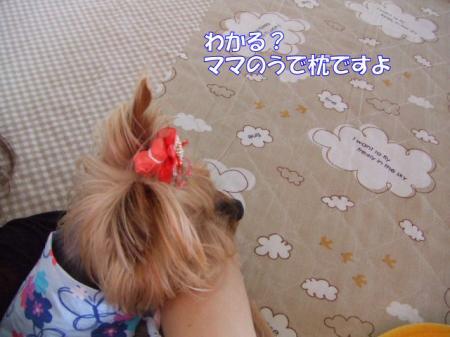 2009_0528pasa2-360009.jpg