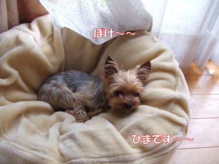2009_0701pasa2-360002.jpg