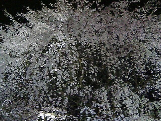 20060329013314