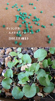 200808173