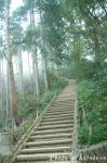 稲荷山コースの心臓破りの階段です