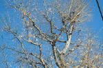 冬支度中の木