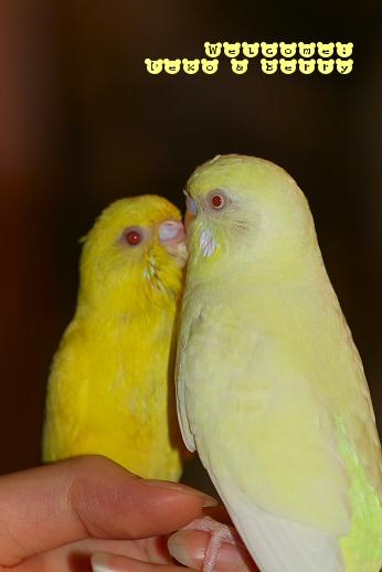 ペコ&ベリー