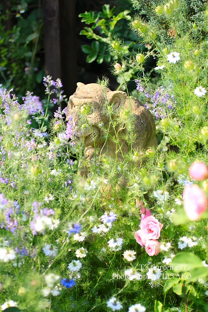Kazuhiro Tamaoki's Rose Garden