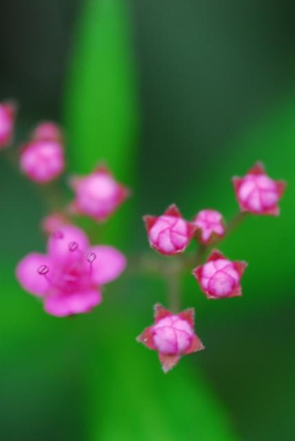 flower23