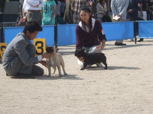 DOG SHOW J♂