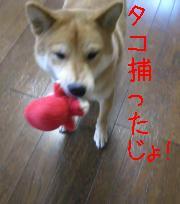 コレじゃ!!