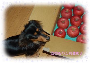 りんご&はな