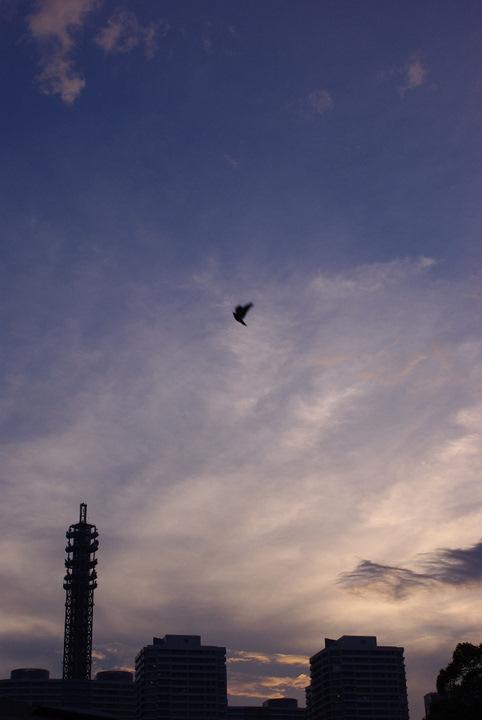 20110622-184048-0251_IMGP.jpg