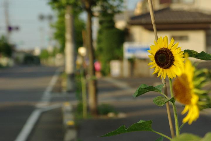 20110809-060734-0853_IMGP.jpg