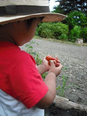大事なミニトマト