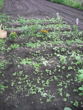 小さな雑草いっぱい