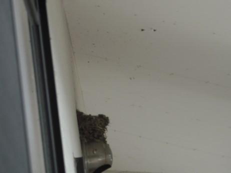 からっぽになったツバメの巣