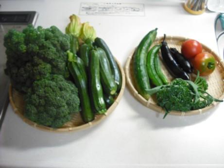 今日の収穫とトマト