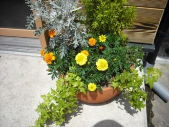 鉢植え植え替え