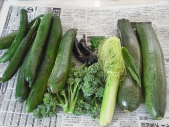 20日収穫の朝取り野菜