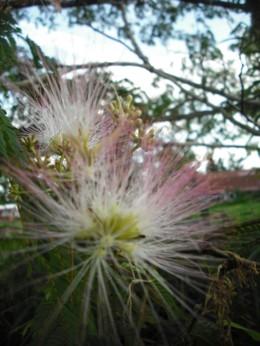 ねむの木3