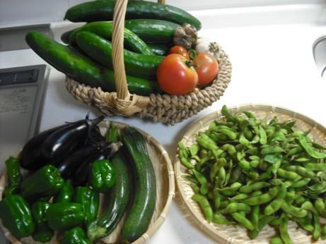 今日の大収穫