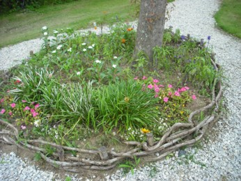 木の根っこの花壇
