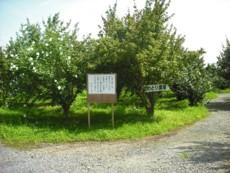 ニワトリ農場