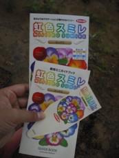 虹色スミレの種