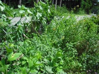 ジャングル状態のお庭