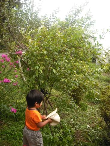ブルーベリーの木