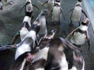 ペンギン水族館2