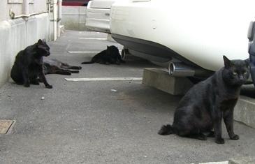 駐車場の黒にゃんず