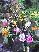 植物園、カラフル